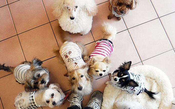 Dog Salon Petit Chien